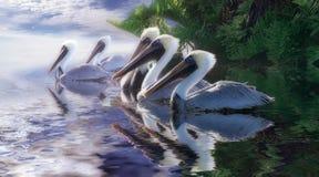 niebiański pelikan zdjęcia stock