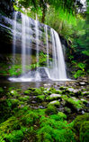 niebiański tropikalny las deszczowy Obrazy Stock