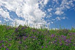 niebieska łąki fotografia stock