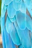 niebieska ara Fotografia Stock