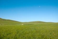 niebieska green Zdjęcia Stock