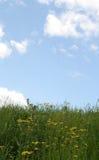 niebieska green Fotografia Stock