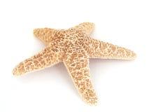 niebieska gwiazda Zdjęcie Royalty Free