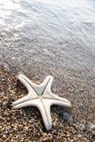 niebieska gwiazda Fotografia Stock