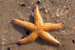 niebieska gwiazda shells01 Zdjęcia Royalty Free