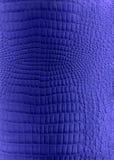 niebieska imitacja skóry konsystencja gadów Obrazy Royalty Free