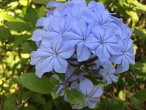 niebieska miękka Zdjęcia Stock