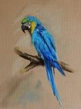 niebieska papuga Fotografia Royalty Free