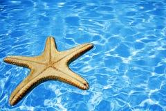 niebieska rozgwiazdę wody Obrazy Royalty Free