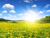 niebieska spowodowana pola pełne się chmura dzień zielonych roślin krajobrazu ruchu pokaz mały nie niebo było pszenicznym biały w Obrazy Stock