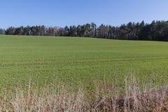niebieska spowodowana pola pełne się chmura dzień zielonych roślin krajobrazu ruchu pokaz mały nie niebo było pszenicznym biały w Zdjęcie Stock