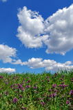 niebieska spowodowana pola pełne się chmura dzień zielonych roślin krajobrazu ruchu pokaz mały nie niebo było pszenicznym biały w Obrazy Royalty Free