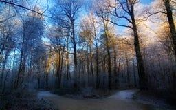 niebieska zimy. Zdjęcia Royalty Free