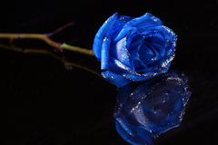 niebieski Fotografia Royalty Free