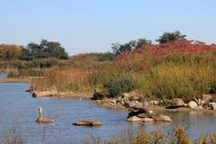 niebieski chmurnego upadku pola krajobrazu nieba drzewa samotny żółty Fotografia Stock