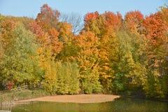 niebieski chmurnego upadku pola krajobrazu nieba drzewa samotny żółty Zdjęcia Stock