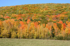 niebieski chmurnego upadku pola krajobrazu nieba drzewa samotny żółty Zdjęcie Royalty Free