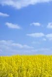 niebieski chmury pola gwałt fluffy niebo Fotografia Royalty Free