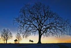 niebieski drzewo Fotografia Royalty Free