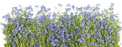 niebieski granice kwiaty Obraz Stock