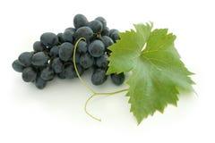niebieski klastry winogron Fotografia Stock