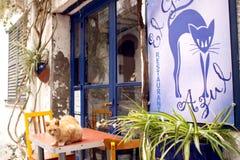 niebieski kot Zdjęcia Royalty Free