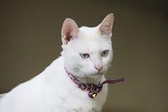 niebieski kot się Obrazy Stock