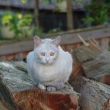 niebieski kot się Fotografia Royalty Free