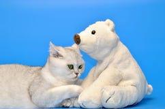 niebieski kot się Obraz Royalty Free