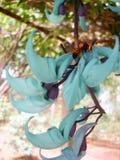 niebieski kwiat odbiorca gałąź fotografia Obraz Royalty Free