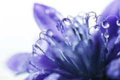 niebieski kwiat się blisko Chabrowy Zdjęcia Royalty Free