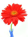 niebieski kwiat wazę kopii Fotografia Stock