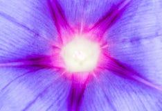niebieski kwiat Zakończenie Zdjęcia Royalty Free