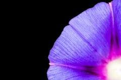 niebieski kwiat Zakończenie Zdjęcie Stock