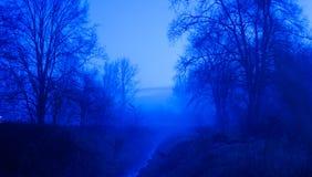 niebieski las Obrazy Stock