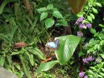 niebieski motyl fotografia stock