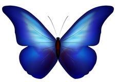niebieski motyl ilustracji