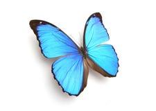 niebieski motyl Fotografia Royalty Free