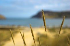 niebieski na plaży Zdjęcie Stock