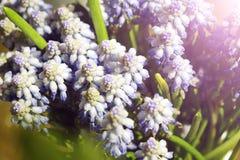 niebieski pola kwiatów Zdjęcie Stock
