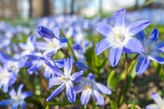 niebieski pola kwiatów Fotografia Royalty Free