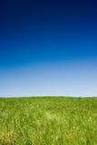 niebieski pola zielone niebo Obraz Royalty Free