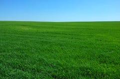 niebieski pola zielone niebo Fotografia Royalty Free