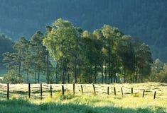 niebieski pole kwiaty trawy nieba łąkowego lato Zdjęcia Stock