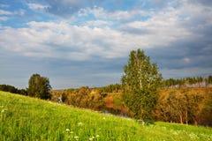 niebieski pole kwiaty trawy nieba łąkowego lato Obrazy Royalty Free