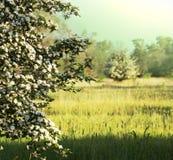 niebieski pole kwiaty trawy nieba łąkowego lato Obrazy Stock