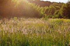 niebieski pole kwiaty trawy nieba łąkowego lato Zdjęcie Stock