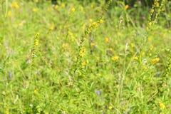 niebieski pole kwiaty trawy nieba łąkowego lato Zdjęcia Royalty Free