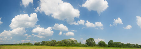 niebieski pole kwiaty trawy nieba łąkowego lato Fotografia Stock