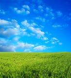 niebieski pole przez niebo pszenicą Fotografia Stock
